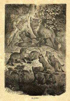1883 Foxes Print Brehms Life of Animals