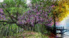 PCペイントで絵を描きました! Art picture by Seizi.N:   毎日の愛犬ティアモとの散歩が楽しみです、また今年も会えたねと満開の桜の舞い散る散歩道を歩きながら今日も感謝です。 そんな公園の桜の絵をお絵描きしてみました。  Missa Johnouchi (城之内 ミサ) - Night bird http://youtu.be/RIZlJaXWXlE