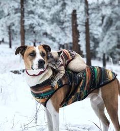 Meet Henry & Baloo, the cat and dog duo hiking through life - animals - Hunde bilder Animal Gato, Mundo Animal, Animals And Pets, Funny Animals, Cute Animals, I Love Cats, Cute Cats, Tier Fotos, Animals Beautiful