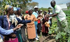 Can innovative communications approaches help farmers adapt to climate smart agriculture? | CCAFS: CGIAR research program on Climate Change, Agriculture and Food Security