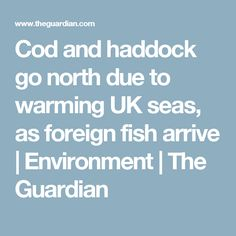 Cod and haddock go north due to warming UK seas, as foreign fish arrive | Environment | The Guardian