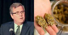 Jeb Bush Just Made a Series of False Comments on #Marijuana http://www.attn.com/stories/4660/jeb-bush-marijuana-myths?utm_source=twitter&utm_medium=direct-share&utm_campaign=shares… #MME #cannabis #medicalmarijuana