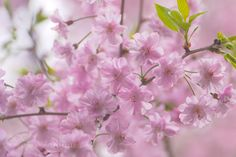 Spring in Kyoto by ufysmenc3v