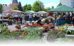 Hamina Market Square is very lively in summer time and this is were you can meet the locals. The Locals, Finland, Summer Time, Things To Do, Dolores Park, Meet, Canning, Plants, Fun