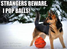 Lol... Thats my dog every ball.. LOL