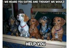 :) funny http://bulldogvitamins.blogspot.com/2014/12/homemade-stew-for-dogs.html