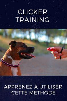 Découvrez la méthode du clicker training et éduquer votre chien avec l'une des méthodes d'éducation positives les plus efficaces ! Education Positive, Cesar Millan, Dog Training, Dogs And Puppies, Labrador, Positivity, Pets, Copyright, Nyx