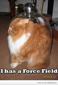 force fields FTW!! lol Funny Sites, Videos Funny, Good Humor, Funny Humor, Fun Funny, Superwholock, Funny Animals, Jokes, Funny Pictures