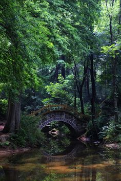 Purdom Forest Park, Xinyang, China