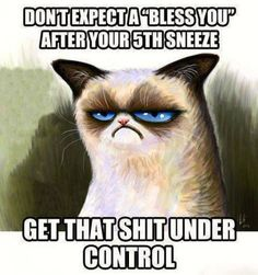 Bless you - grumpy cat meme - http://www.jokideo.com/