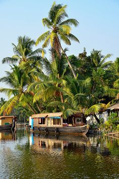 Cochin, India. Explore the Kerala backwaters onboard a traditional houseboat. You'll be able to see the rural lifestyles along the waterways that you would never see from the road.