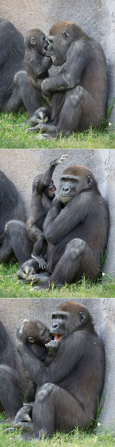 """Primate playtime with Joanne and her """"Uncle"""" Frank. (photos: Angie Bell)"""