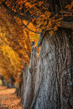 Amazing autumn by gabriele-hartmann autumn trees red forest light tree fall Amazing autumn gabriele-hartmann Autumn Tale, Fall Carnival, Forest Light, Fall Images, Seasons Of The Year, Tree Lighting, Landscape Photos, Earth Tones, Nice View