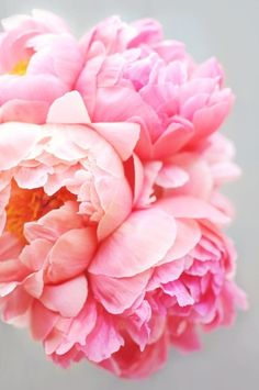 We absolutely love peonies for weddings! Try adding white peonies to your bouquet for an understated look or bright pink like these for something beautiful and fresh!!
