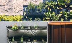 A horta inteligente que só precisa ser regada a cada 15 dias e permite produzir alimentos em qualquer lugar Grande, Organic, Diy, Organic Vegetables, Green Ideas, Stress, Window, Vegetable Garden, Healthy Recipes