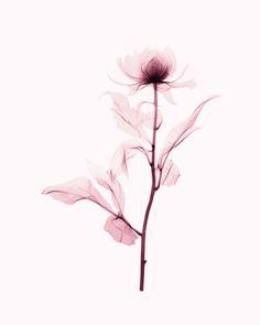 Pin by olive blackmen on ink madness beautiful flower tattoo Back Tattoos, Mini Tattoos, Body Art Tattoos, Sleeve Tattoos, Cool Tattoos, Tatoos, Xray Flower, Flower Art, Beautiful Flower Tattoos