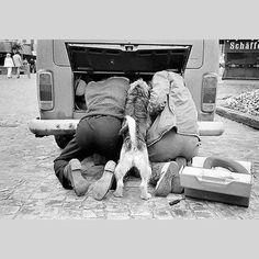 """Hopefully the pup knows which bolts to turn..#vwlife #vw #vwlove #vwbuslife #vwbus #aircooled #kombi #type4 #vintagecamper"""