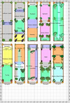 Great Square Foot Garden Plan ideas, shows ideas for planting, plants, number of plants per square, spacing, When to plant and harvest date.