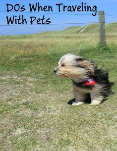 Make one special photo charms for your pets, 100% compatible with your Pandora bracelets.  Here's a wrap up of tips for traveling with pets.