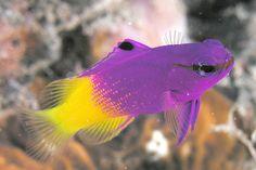 Image from https://upload.wikimedia.org/wikipedia/commons/c/c9/3757_aquaimages.jpg.