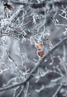 *Winter Morning