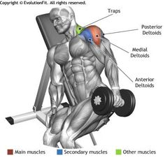 SHOULDERS - ONE ARM INCLINE BENCH LATERAL RAISE