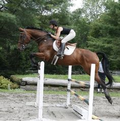 How To: Improve your jumping position « HORSE NATION look how steady that leg is, read this article it's a pretty good read. Dressage, Horse Riding Tips, Riding Gear, Horse Exercises, English Riding, Show Jumping, Horse Pictures, Horse Care, Horse Photography