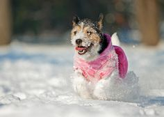 5 common MYTHS about dogs in winter
