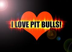 PITBULLS  PITBULLS ARE MY LIFE! IM A TRUE PITBULL FAN NO MATTER WHAT! PITBULLS ARE THE BEST DONT JUDGE THEM FOR WHAT U HEAR. and if u have a pitbull then u exactly  that they are not MEAN. remember dont judge a book by its cover.