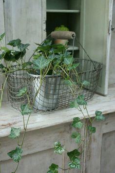 Houseplants That Filter the Air We Breathe Le Grenier De Ninon Pot Pourri, Home Decor Baskets, Ivy House, Love Garden, Rose Cottage, Industrial House, Colorful Garden, Wire Baskets, Garden Gates