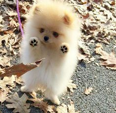 Floof vs. leaf I'm with you there also super cute