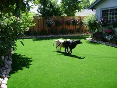 These pair LOVE their new EasyTurf yard www.easyturf.com l outdoor living l backyard l artificial turf l fake grass l pet grass l dog