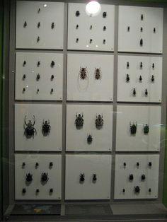 Insectarium - Montréal #Montréal #Québec #Canada
