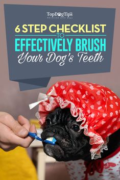 6 Step Checklist for Fast & Effective Dog Teeth Brushing VIDEO. Did you know that dog teeth brushing is not only a matter of your pets dental hygiene and preventing bad breath but it also affects his whole body health? Safe Fruits For Dogs, Foods Bad For Dogs, Dental Hygiene, Dental Health, Dental Care, Dog Health Tips, Pet Health, Dog Breath, Teeth Cleaning