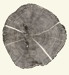 9 | Beautiful Photos Of Tree Rings Remind Us To Slow Down A Little | Co.Exist: World changing ideas and innovation