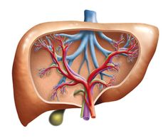 Do you have high liver enzymes or a fatty liver? If your doctor delivers news of high liver enzymes or a fatty liver, make sure you understand what that means. Small Artificial Plants, Artificial Plant Wall, Artificial Turf, Artificial Flowers, Hanging Plants Outdoor, Indoor Plants, Outdoor Privacy, Garden Plants, High Liver Enzymes