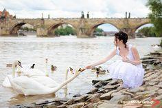 Свадьба в Праге | 58 фотографий