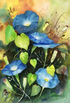 Morning Glories (T)  Have a blessed morning!