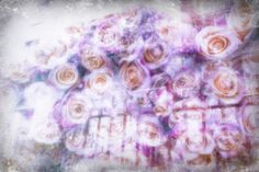 a place for the faeries of the flowers by alice saga #roses #lilacs #doubleexposure