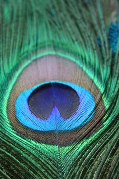 Pretty peacock feather (taken whilst playing about with my new extension tubes for my dSLR)