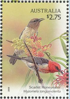 Scarlet Myzomela stamps - mainly images - gallery format Rare Stamps, Vintage Stamps, Postage Stamp Collection, Postage Stamp Art, Australian Birds, Scarlet, Fauna, Mail Art, Stamp Collecting