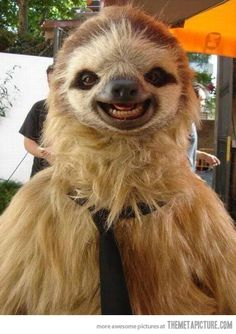 A very photogenic sloth…   (Hay sloth, Is Chewbacca a relative of yours?)