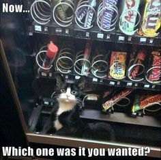 Gato Tendrá Nada De Lo Que Usted Desea