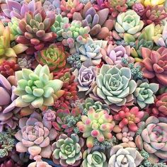 Image discovered by Li Ji Mun. Find images and videos about aesthetic, nature and flowers on We Heart It - the app to get lost in what you love. Succulent Arrangements, Cacti And Succulents, Planting Succulents, Cactus Plants, Garden Plants, House Plants, Terrarium Plants, Succulent Terrarium, Echeveria