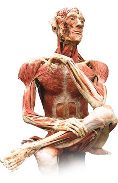 #Body Worlds.  #Science Museum of Virginia.  May 25th-September 23rd, 2012.