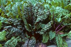 Cabbage, Vegetables, Tips, Plants, Food, Gardening, Dreams, Recipes, Healthy Herbs