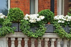 A Window Planting in London Worth Writing Home About