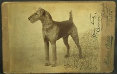 Postcard / c. 1900's