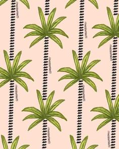 Lash Palm Trees.