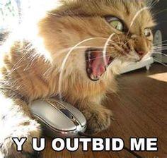 Y U outbid me
